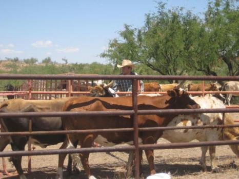 Tubac, az South Mill Ranch 26
